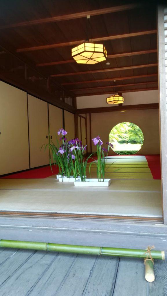 北鎌倉の明月院 丸窓 燕子花が飾られている<