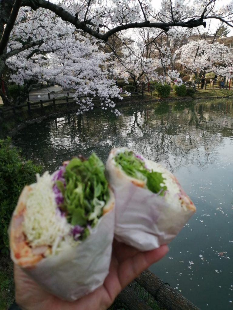 4月 満開の桜の下でお花見を楽しむ 安城公園 安城公園 の 満開の 桜 ソメイヨシノ