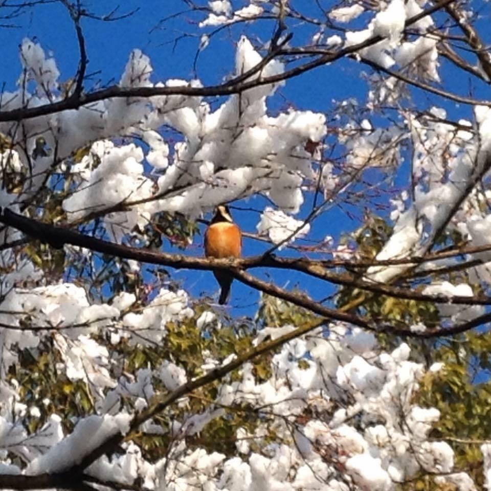 ヤマガラ と言います 。 #金華山 ヤマガラ(山雀、学名:Parus varius)は、スズメ目シジュウカラ科シジュウカラ属に分類される鳥類。